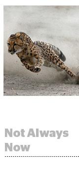 real time cheetah
