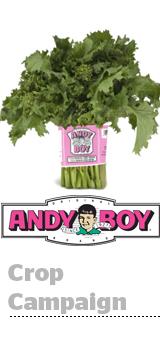 AndyBoy