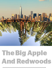 big apple redwoods img