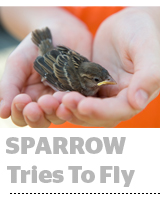 Criteo's SPARROW Proposal Marks Ad Tech's Venture Into Privacy Sandboxes And W3C - AdExchanger